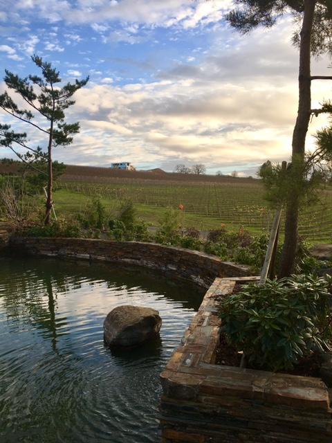 saffron-hills-vineyard