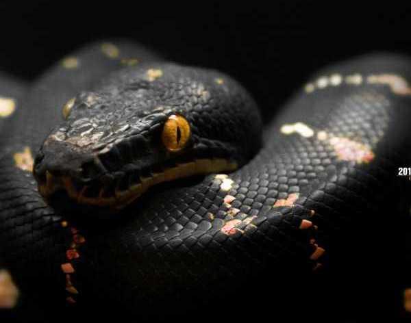 black_snake_small