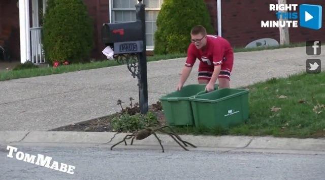 spider prank_1445949740908_25799823_ver1.0_640_480