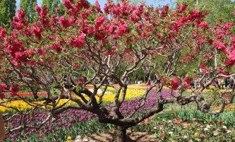 Pekings Botanischer Garten