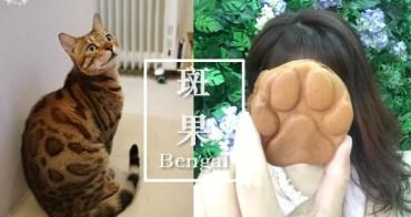 《板橋貓咪咖啡》斑果咖啡簡餐Bengal cafe|豹貓出沒!附設寵物旅館,近府中站
