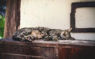 gato-dormir