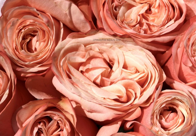 L'Oreal Collection Exclusive Pinks roses 2