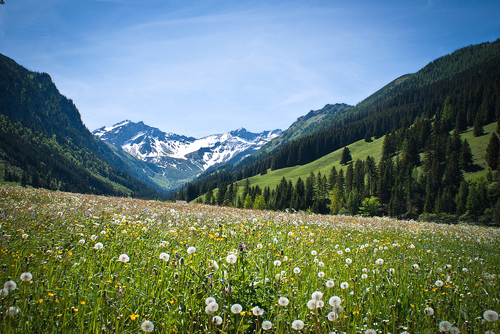 A wildflower field in Steg, Triesenberg, a popular sport destination