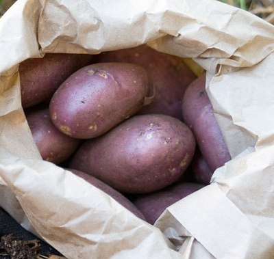 A Kitchen Garden Diary: November 2012 + Mayo-free Potato Salad