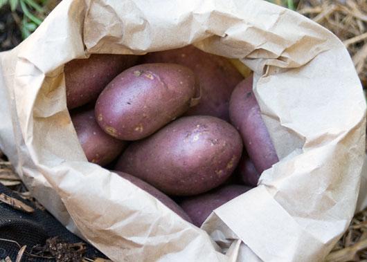 Royal Blue Potatoes