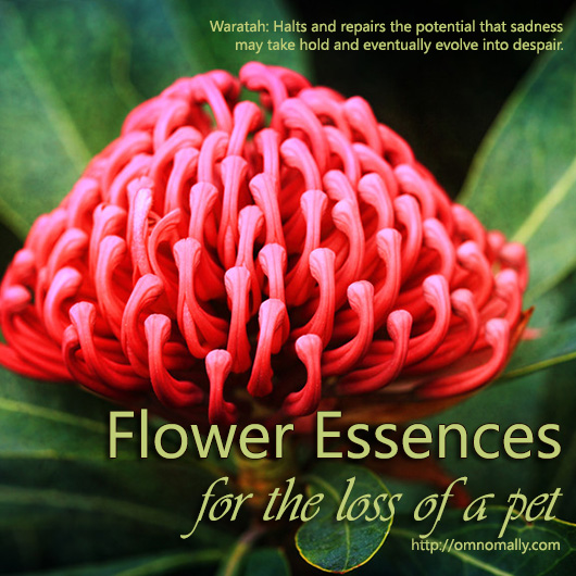 Flower Essences for the Loss of A Pet