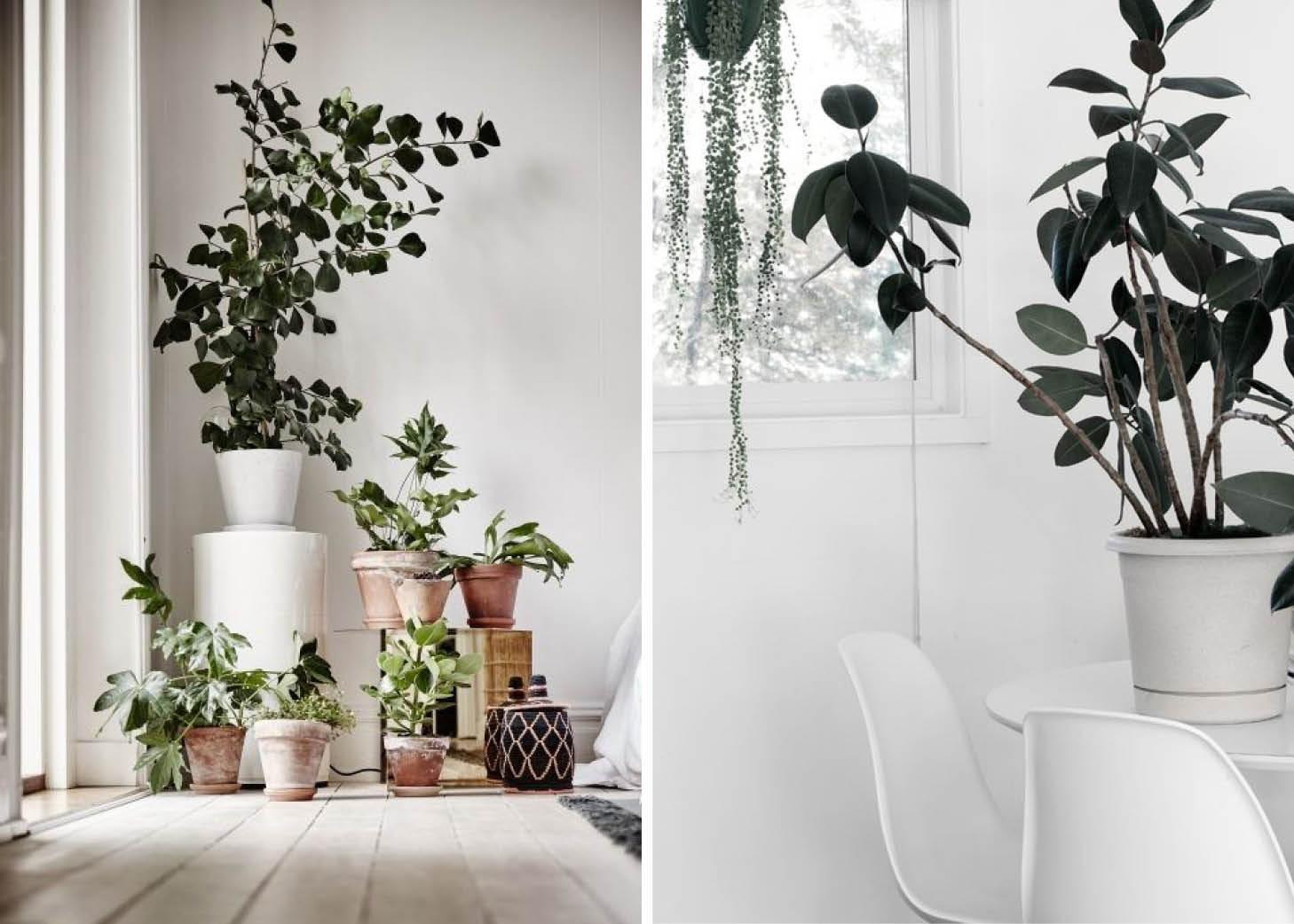 Πρασινίστε το σπίτι σας με φυτά εσωτερικού χώρου