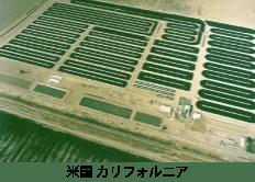 DICスピルリナ生産現場(米カリフォルニア)