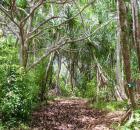 Nakoa Trail Image