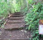 Moleka Trail