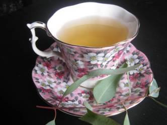 eucalyptus-tea2