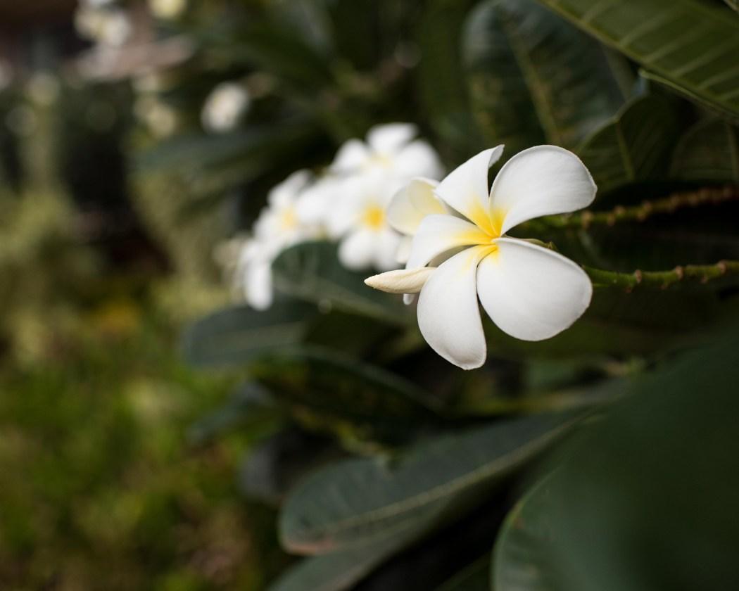 hawaii161205_345