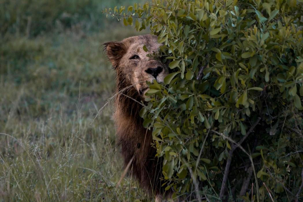 safari_170322_11