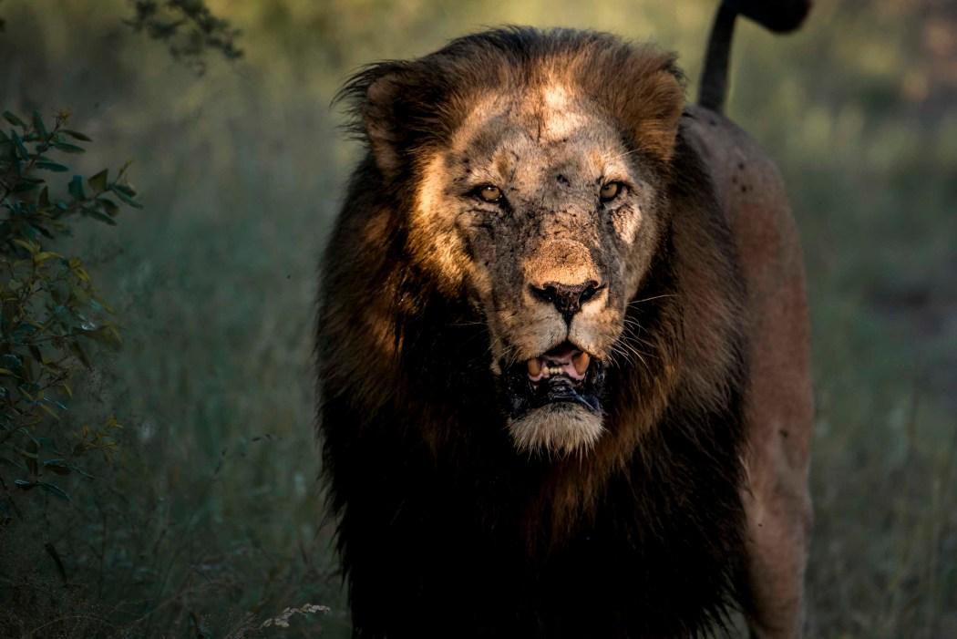 safari_170322_19