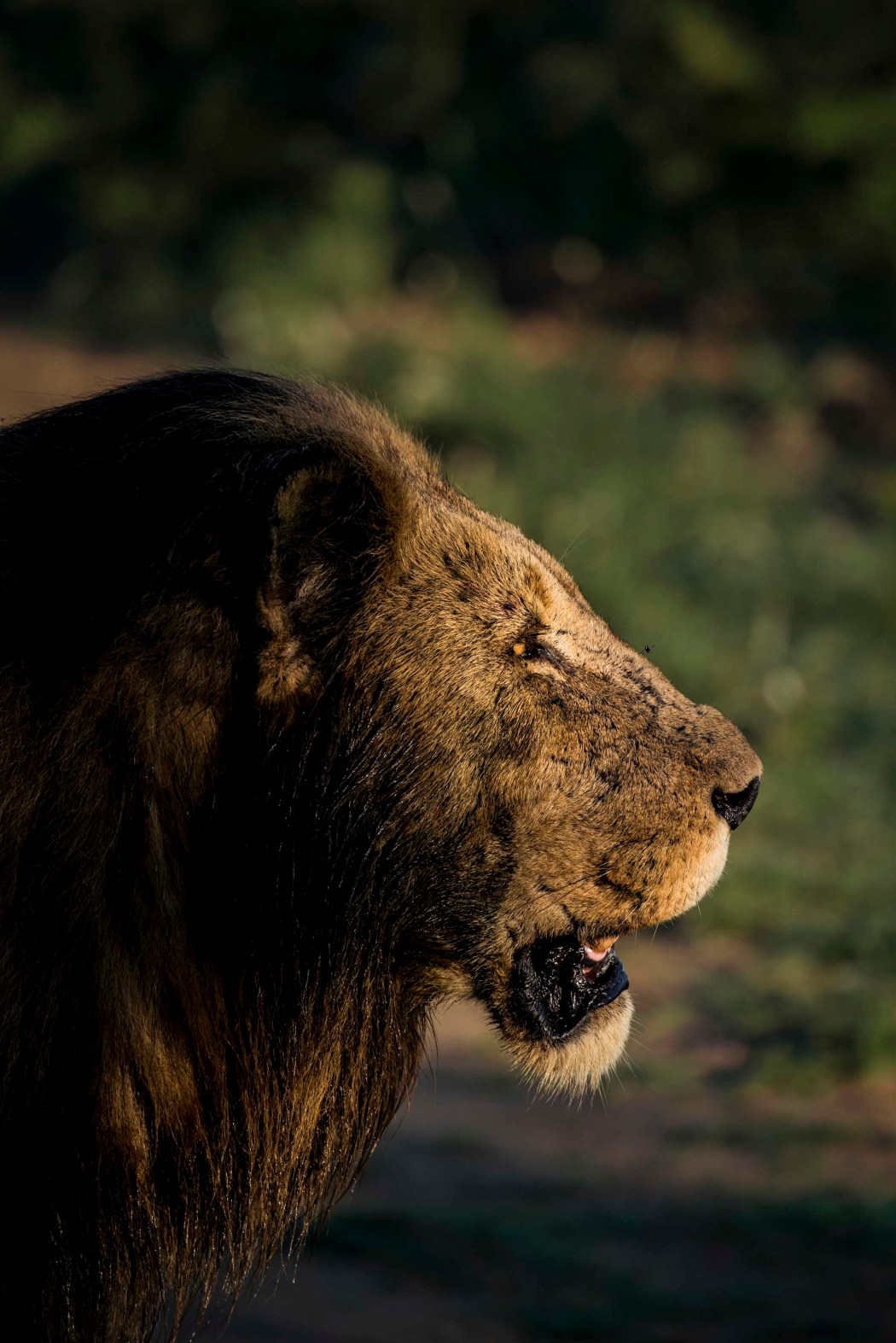 safari_170322_20