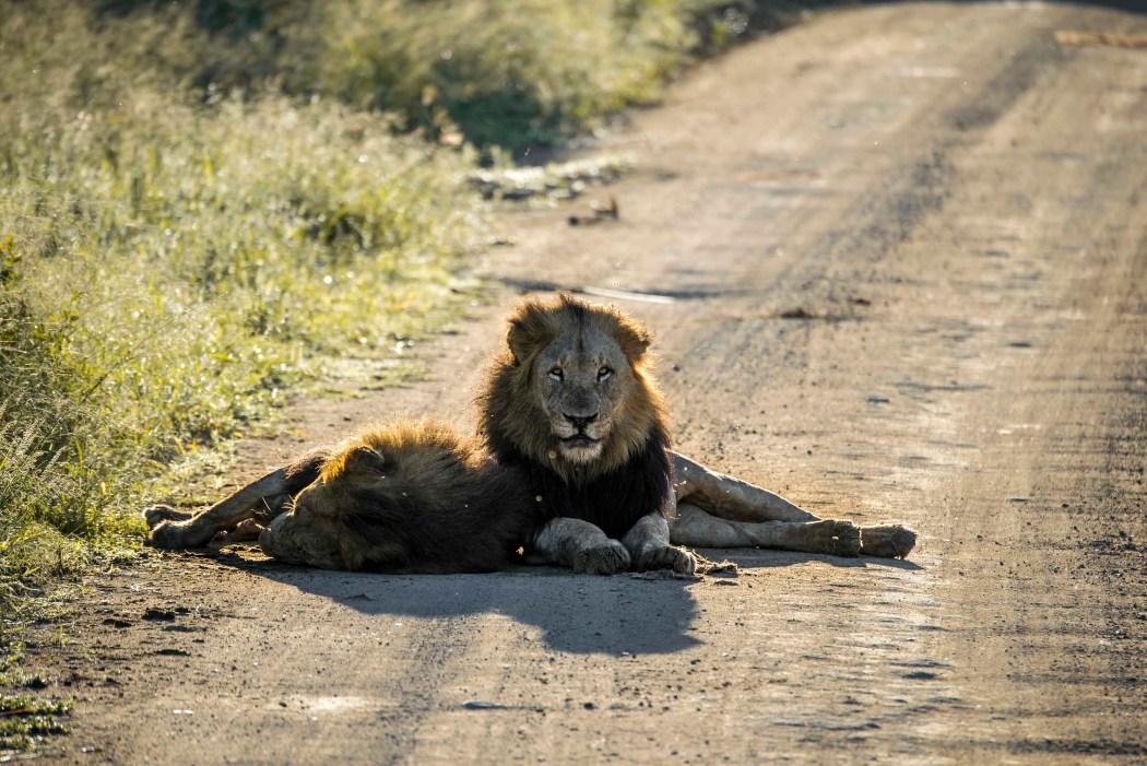 safari_170322_24