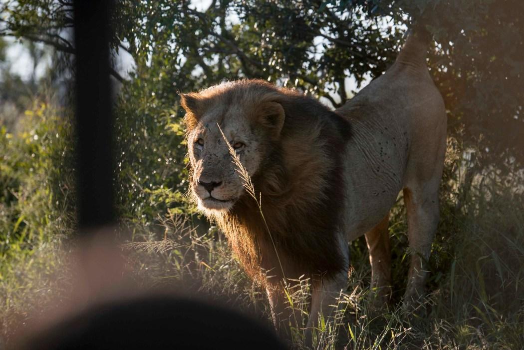 safari_170322_320