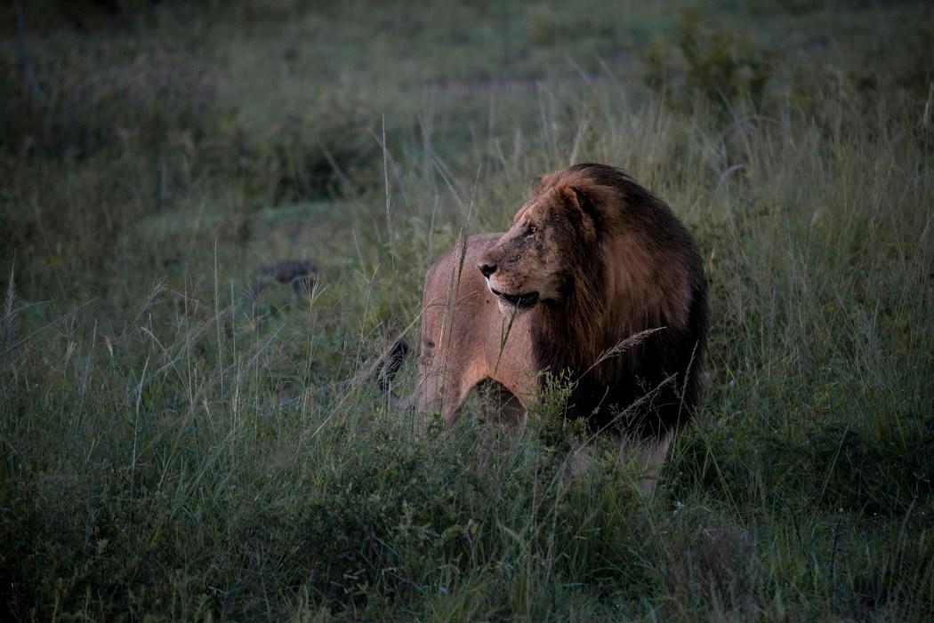 safari_170322_8