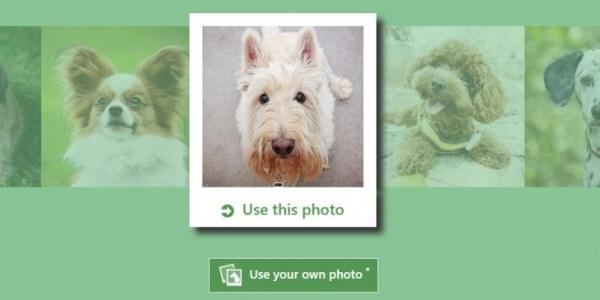 what-dog.net, la aplicación de Microsoft para identificar la raza de tu perro
