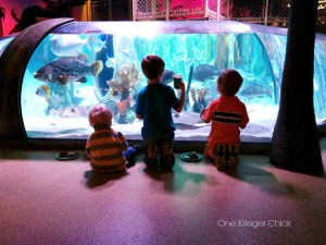 Breakfast in an aquarium-perfect start to the Summer!
