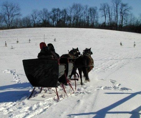 Eric Guggisberg heading out in his antique sleigh