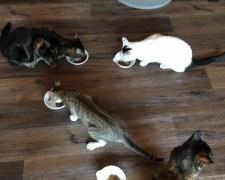 里親募集型!保護猫カフェ「猫家ねこ玉」で店長さんから聞いた話
