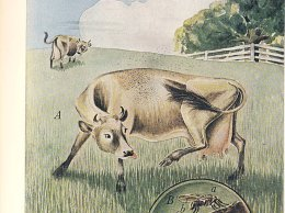 """From """"The Yearbook of Agriculture"""" 1952, published by the United States Department of Agriculture"""