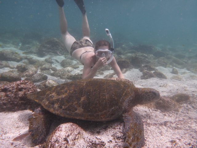galapagos brianna randall on the horizon line blog turtle