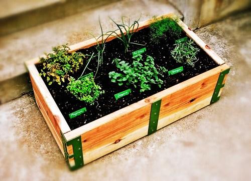 Medium Of Balcony Garden Kit