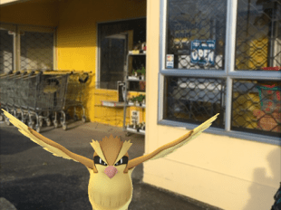 Pokemon Pidgey  at Nolas