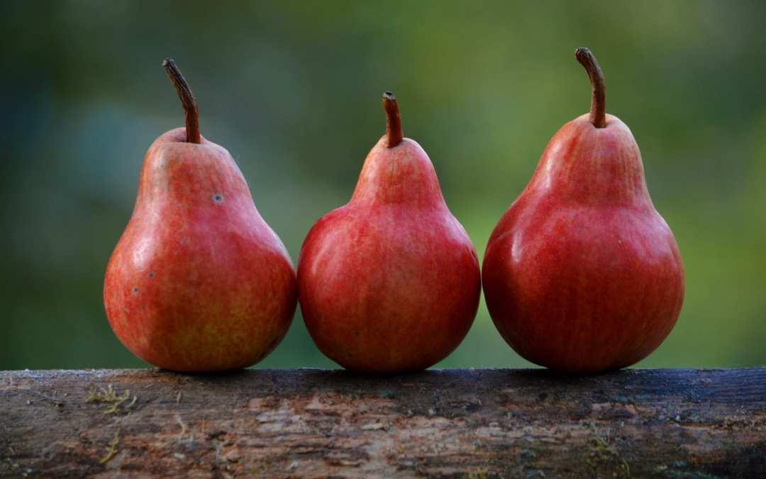 Holistic Sprays for Fruit Trees