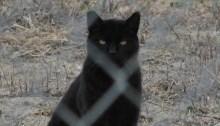 11193822684_67c86a6fe7_b_black-cat