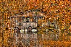 louisiana swamps photo