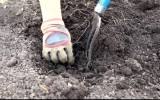Cheap ways to add Nutrients to your Soil