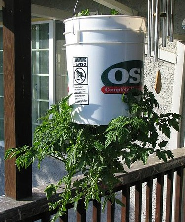 Hanging Bucket Planter for Tomatoes