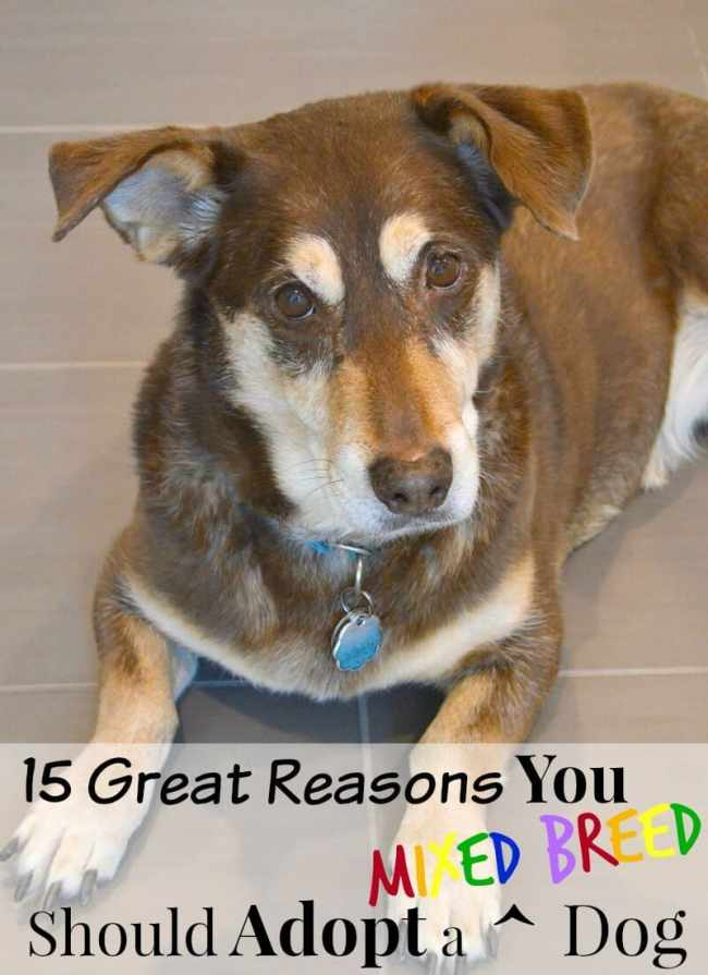 15 Great Reasons To Adopt a Dog #FeedTheFriendship #CG #sponsored