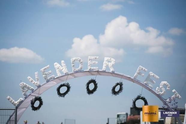 lavender fest 5