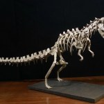 Origami T-Rex Skeleton