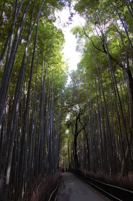 Posti emozionanti in Giappone: la foresta di bambù di Arashiyama