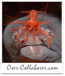Oser-Collaborer - Intelligence Collaborative 2