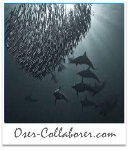 Oser-Collaborer - Intelligence Collaborative 5