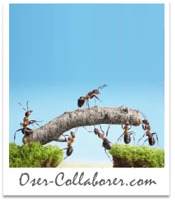 Oser-Collaborer - Intelligence Collaborative