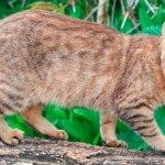 Gatos selvagens