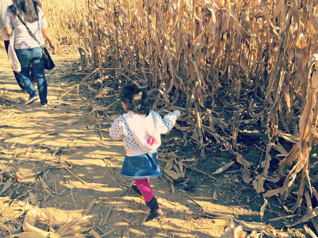konows-corn-maze