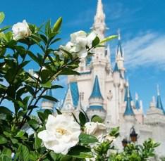 Disney World Snapchat Filters - Magic Kingdom Snapchat Filters