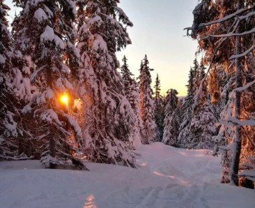 What are the Best Vehicles for Road Trip to the Ski Resort