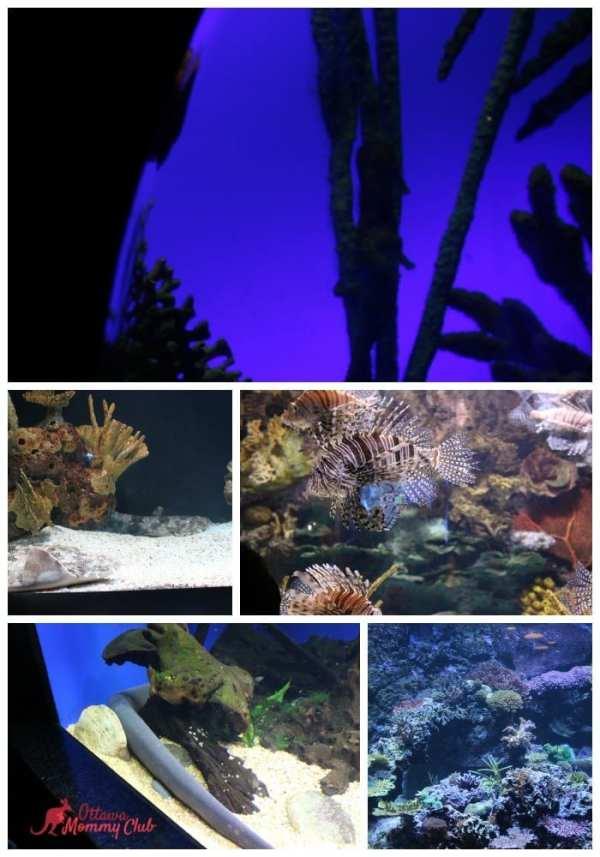 Ripley's Aquarium- The Gallery