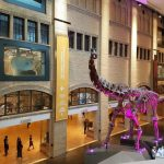 Delight in Different Adventures at the Royal Ontario Museum #Review #SeeTorontoNow