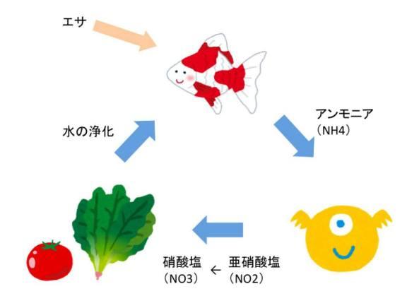 アクアポニックスの循環イメージ